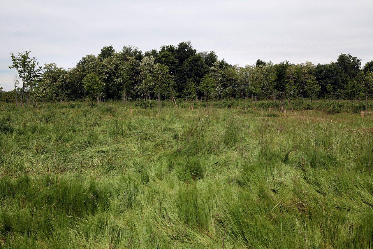 Riqualificazione-ambientale-aree-Parco-Naturale-delle-Lamie-del-Sesia-5-1280x853.jpg