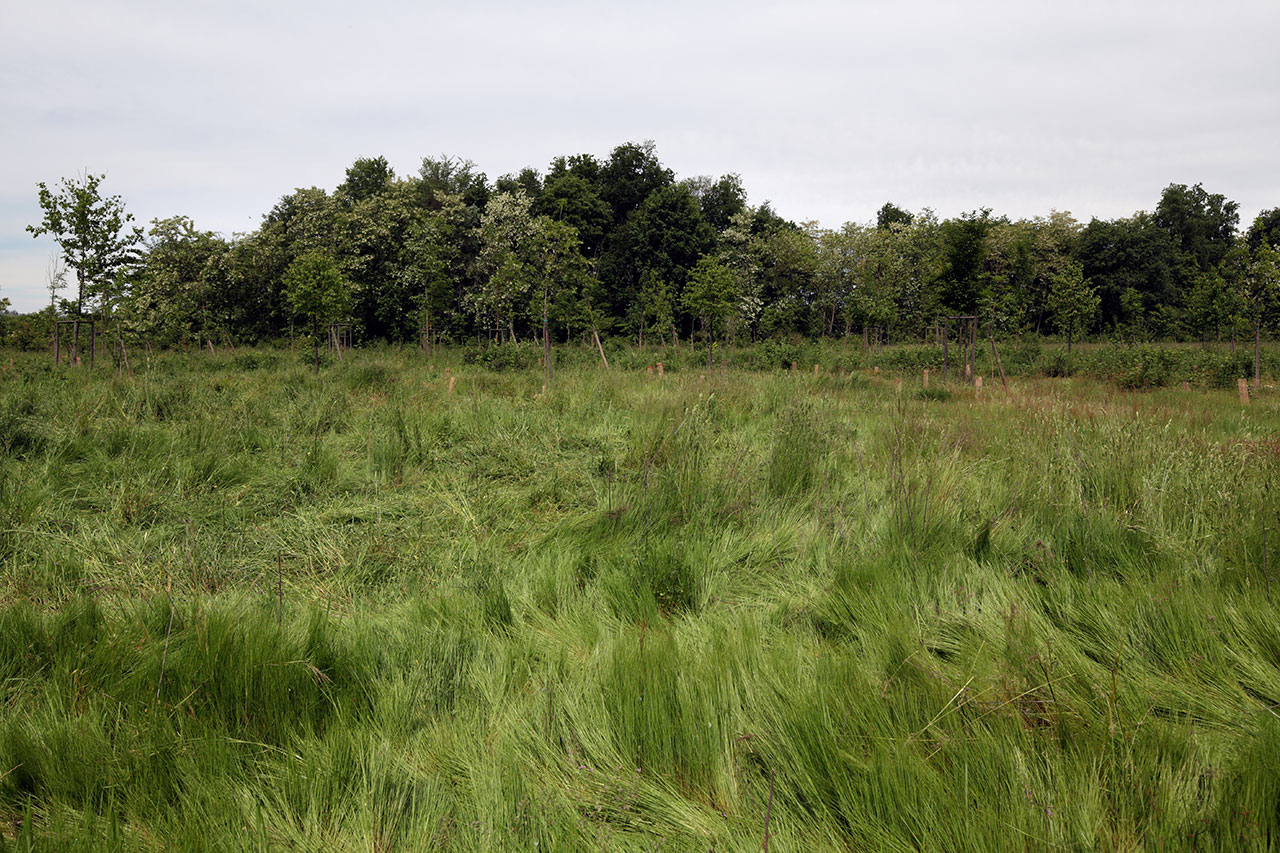 http://www.ecoplame.it/wp-content/uploads/2017/03/Riqualificazione-ambientale-aree-Parco-Naturale-delle-Lamie-del-Sesia-5.jpg